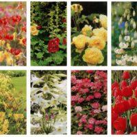 SERIES Flowers